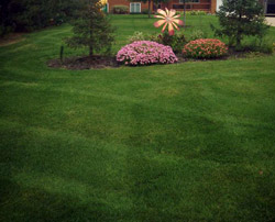 Well Groomed Lawn & Manicured Landscape