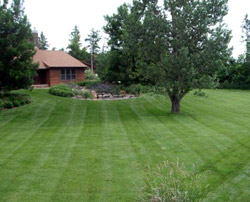 Well-Groomed Lawn