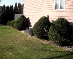 Pruned Shrubs